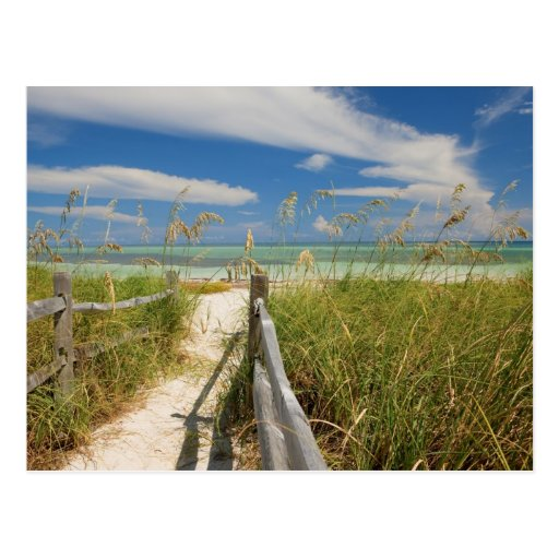 Sea oats Uniola paniculata) growing by beach, Post Card