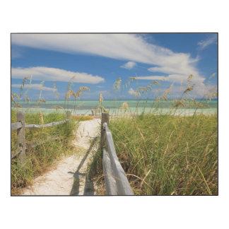 Sea oats Uniola paniculata) growing by beach Wood Wall Art