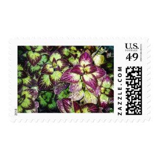 Sea of Coleus Stamp