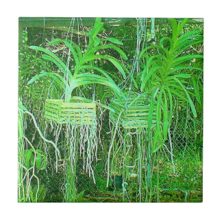 Sea of Orchids growing in a hot box in florida Small Square Tile