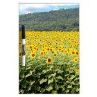 Sea of Sunflowers Dry Erase Board