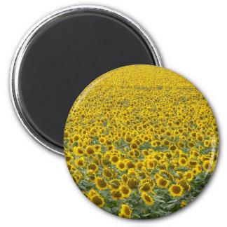 Sea of Sunflowers Magnet