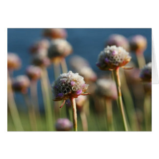 Sea of Thrift Card