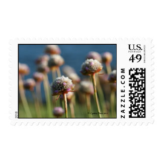 Sea of Thrift Stamps