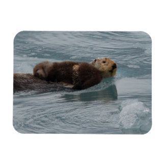 sea otter and baby rectangular photo magnet