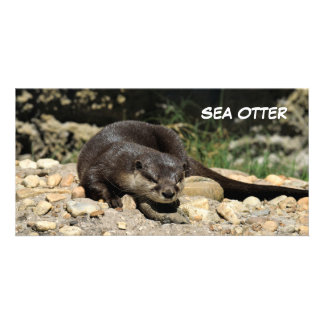 Sea Otter At Wildlife Reserve Card