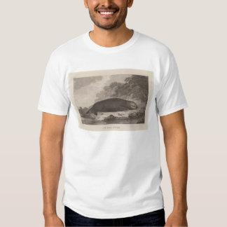 Sea otter, British Columbia T-Shirt