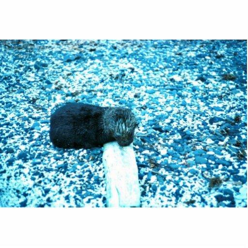 Sea Otter Cut Outs