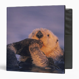 Sea Otter, Enhydra lutris Binder