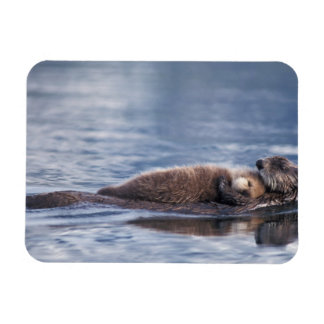 sea otter, Enhydra lutris lutris, mother with 2 Rectangular Photo Magnet