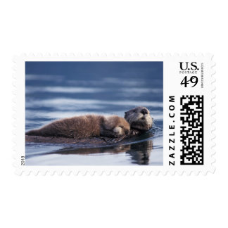 sea otter, Enhydra lutris lutris, mother with Postage