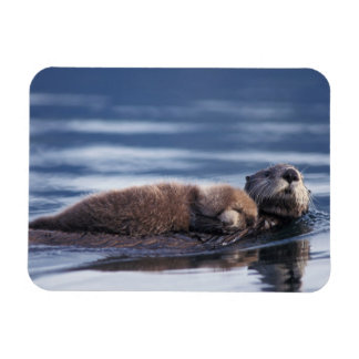 sea otter, Enhydra lutris lutris, mother with Rectangular Photo Magnet