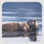 sea otter, Enhydra lutris lutris, mother with Square Stickers