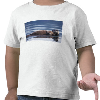 sea otter, Enhydra lutris lutris, mother with T-shirts