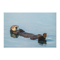 Sea otter floating on back in ocean canvas print
