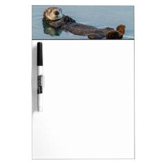 Sea otter floating on back in ocean Dry-Erase board