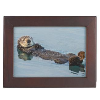 Sea otter floating on back in ocean memory box