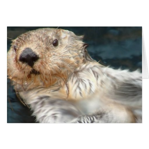 how to make a sea otter