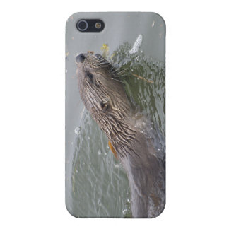 Sea Otter  iPhone Cases