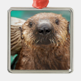 Sea otter love metal ornament