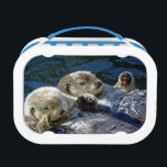 """Sea-otter lunchbox<br><div class=""""desc"""">Lunchbox with photo of sea-otters and sealion from New Forest Pics</div>"""