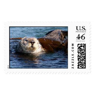 Sea Otter, Morro Bay, California Postage Stamp