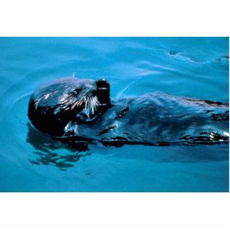 Sea Otter oil Photo Cutouts