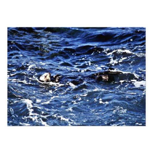 Sea Otter - Pt. Lobos State Preserve Announcements