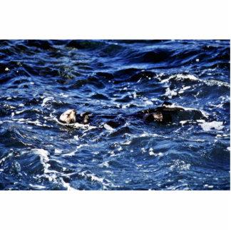 Sea Otter - Pt. Lobos State Preserve Cut Outs