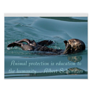 Sea otter Reflection with Famous quote poster