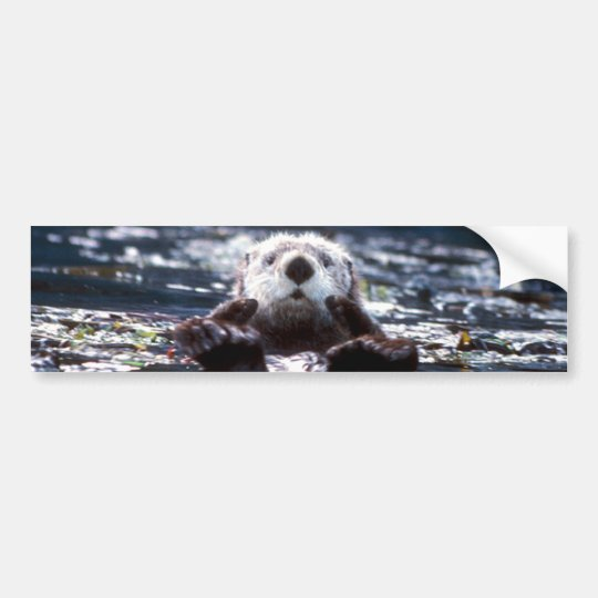 Sea Otter Swimming Bumper Sticker