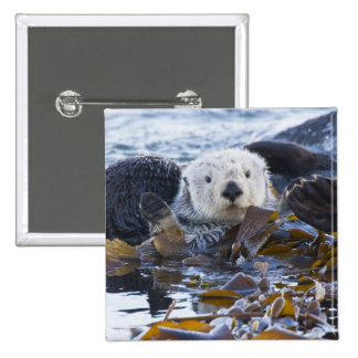 Sea otter wrapped in kelp 2 inch square button