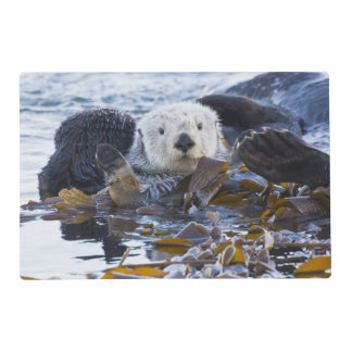 Sea otter wrapped in kelp placemat