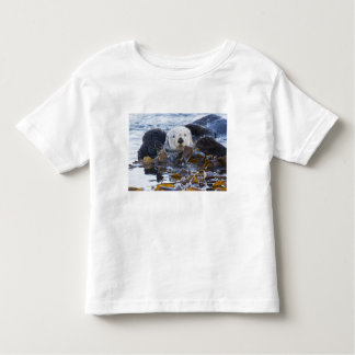 Sea otter wrapped in kelp shirts