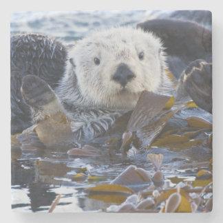 Sea otter wrapped in kelp stone coaster