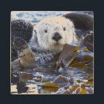 "Sea otter wrapped in kelp wooden coaster<br><div class=""desc"">Cathy &amp; Gordon Illg \\COPYRIGHT Cathy &amp; Gordon Illg / Jaynes Gallery / DanitaDelimont.com | USA,  California,  San Luis Obispo County. Sea otter wrapped in kelp. Credit as: Cathy &amp; Gordon Illg / Jaynes Gallery / DanitaDelimont.com | AssetID: US05 BJY0016</div>"