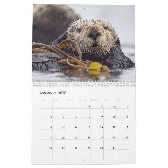 Cal 2020-National Geographic Owls Wall Calendar