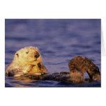Sea Otters, Enhydra lutris 4 Greeting Card
