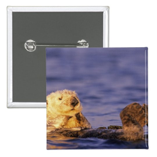 Sea Otters, Enhydra lutris 4 Pinback Button