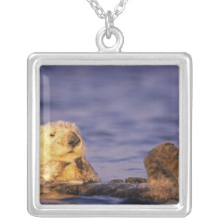 Sea Otters, Enhydra lutris 4 Silver Plated Necklace