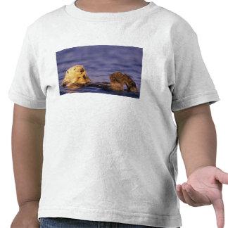 Sea Otters, Enhydra lutris 4 T Shirt