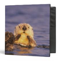 Sea Otters, Enhydra lutris 5 Binder