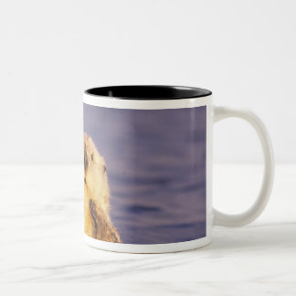 Sea Otters, Enhydra lutris 5 Two-Tone Coffee Mug