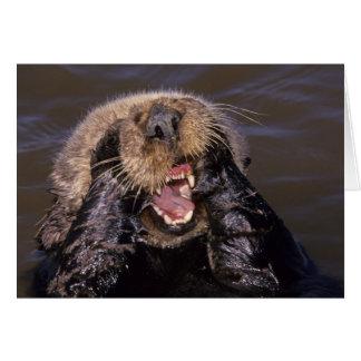 Sea Otters, Enhydra lutris 6 Card