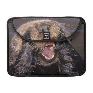 Sea Otters, Enhydra lutris 6 MacBook Pro Sleeves