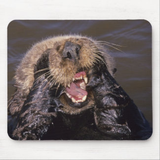 Sea Otters, Enhydra lutris 6 Mouse Pad