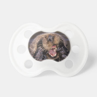 Sea Otters, Enhydra lutris 6 Pacifier