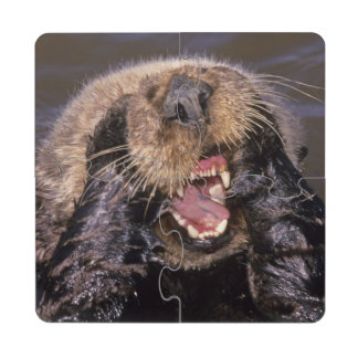 Sea Otters Enhydra lutris 6 Puzzle Coaster