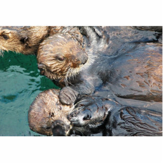 Sea Otters in Capture Pens Standing Photo Sculpture