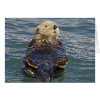 Sea otters play on icebergs at Surprise Inlet Card